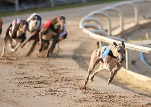 Chương trình đua chó biểu diễn sẽ mang tới không khí sôi nổi và hấp dẫn.