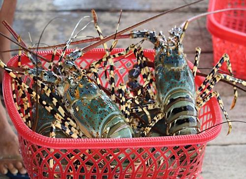 Nhiều mặt hàng thủy sản của Việt Nam được miễn thuế.