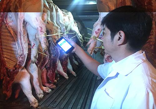 Kiểm tra nguồn gốc thịt heo nhập vào TP HCM. Ảnh: Sơn Hoà.
