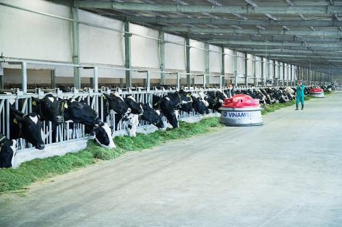 Vùng nguyên liệu chất lượng giúp Vinamilk dẫn đầu thị trường sữa tươi - 2
