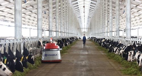 Vinamilk đang đẩy mạnh ứng dụng hệ thống tự động hóa và trí thông minh nhân tạo (AI), thực hiện cách mạng 4.0 trong việc quản lý, vận hành trang trại.