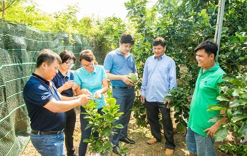 Đại biểu có chuyến viếng thăm vườn bưởi của nông dân Hồ Minh Khoa ở Bình Hòa B, Song Bình, Chợ Gạo, Tiền Giang.