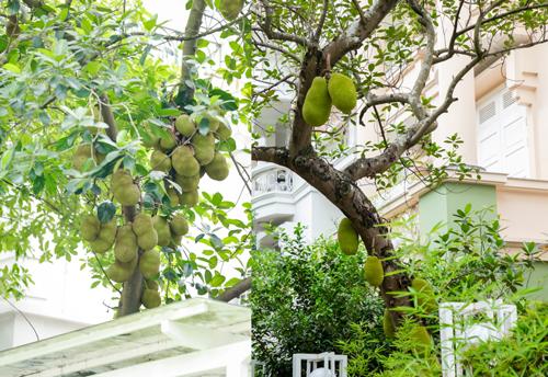 Các cây ăn quả lâu năm được nhiều cư dân trồng trong khu vườn.\
