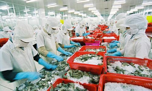 Công nhân chế biến tôm tại một nhà máy trong nước.