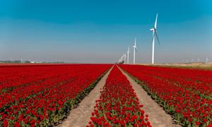 Lý do Hà Lan nhỏ bé nhưng xuất khẩu nông sản thứ hai thế giới
