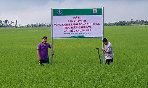 Một thửa ruộng canh tác dùng phân hữu cơ tại tỉnh Long An.