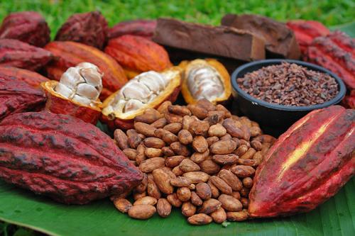 The Bitter Cacao tổ chức họp mặt chương trình thiện nguyện Tây Nguyên - 4