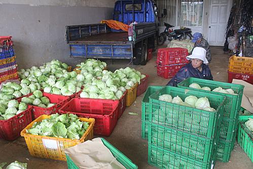 Rau xanh những ngày này ở Đà Lạt được các nhà vườn tranh thủ thu hoạch sau mưa lũ.