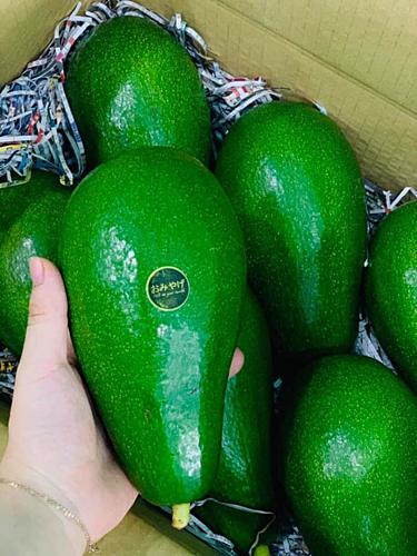Bơ đài loan được bán tại cửa hành nhập khẩu ở Hà Nội. Ảnh: Omiyage Fruit&More