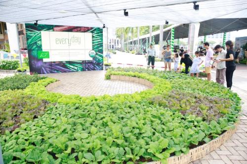 Mô hình trồng rau sạch an toàn sẽ tiếp tục giới thiệu trong ngày hội.