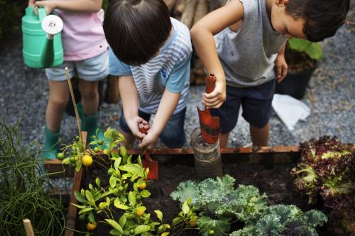 Trẻ nhỏ thoả sức học làm nông trại với 2 khu trang trại Organic Farm và Kid Farm. Nếu ảnh không phải chụp trong khu nông trại dự án thì không dùng được.