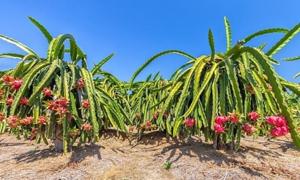 Bình Thuận kỳ vọng xây vùng nông nghiệp công nghệ cao