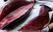 Xuất khẩu cá ngừ sang EU, Trung Quốc giảm