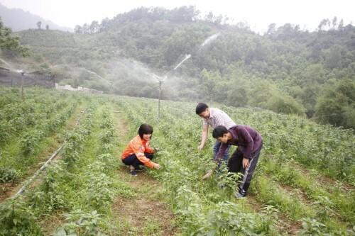 Đồng hành cùng người dân sản xuất nông nghiệp theo hướng bền vững.