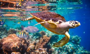 Hảo Hảo bật mí bí quyết du lịch Maldives thuận lợi