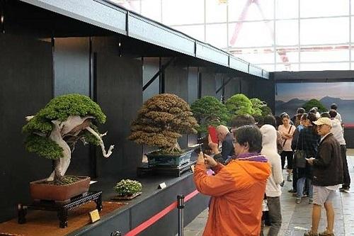 Triển lãm giới thiệu đến du khách hàng nghìn tác phẩm Bonsai nghệ thuật nổi tiếng.
