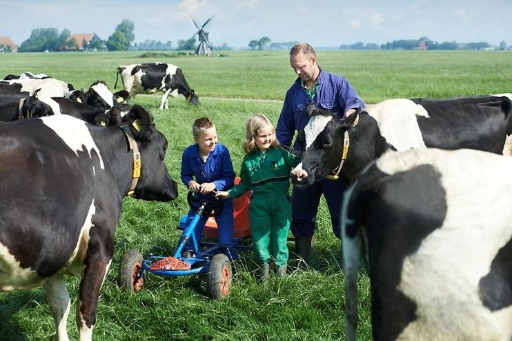 Nông dân chuẩn Hà Lan có cách chăm sóc bò đặc biệt như thành viên trong gia đình.
