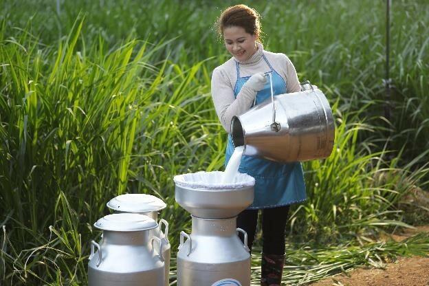 Dòng sữa tươi chất lượng sẽ được cung cấp cho nhà máy Cô Gái Hà Lan. Doanh nghiệp hiện có hệ thống thu mua sữa tươi nguyên liệu được đầu tư hơn 2 thập kỷ từ hơn 2000 hộ nông dân trên khắp tỉnh thành cả nước.