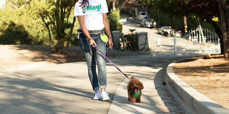 Wag cung cấp dịch vụ dắt chó đi dạo theo yêu cầu. Ảnh: Wag