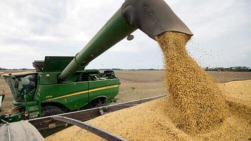 Thu hoạch nông sản tại Mỹ. Ảnh: AP