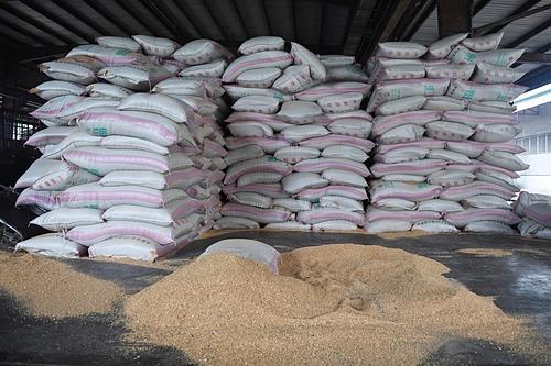 Đậu tương nhập khẩu được nghiền thành thức ăn chăn nuôi tại Trung Quốc. Ảnh: AFP