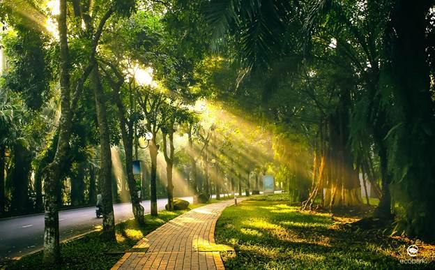 Không gian sống xanh tại Khu đô thị sinh thái Ecopark.