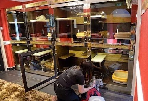 Một khách sạn dành cho thú cưng ở Hà Nội. Ảnh: Linopet