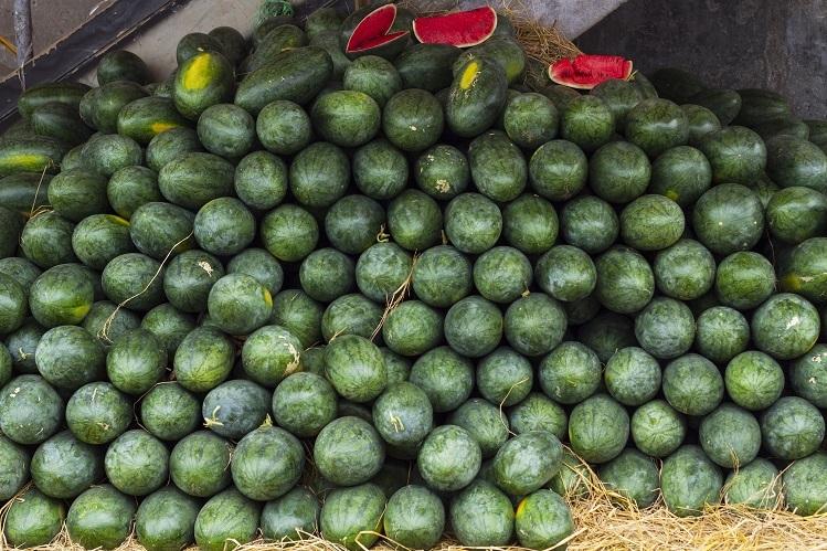 Sacombank mua 30 tấn dưa hấu để hỗ trợ nông dân.