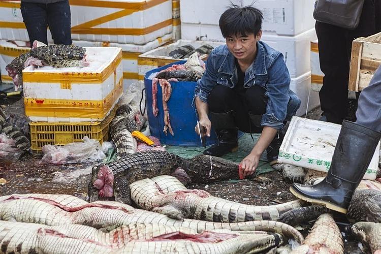 Một người giết mổ cá sấu tại chợ hải sản Huangsha, tỉnh Quảng Châu. Ảnh: EPA