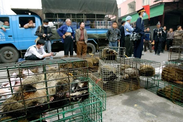 Cầy hương được bày bán tại một chợ ởQuảng Châu năm 2004. Ảnh: SCMP
