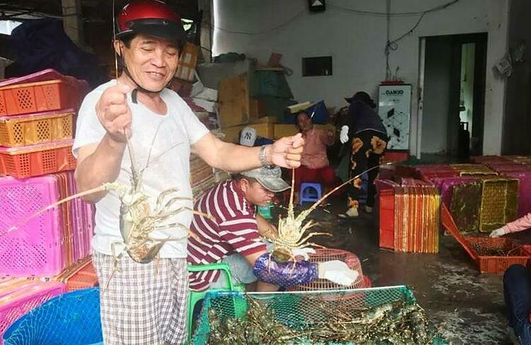 Người nuôi tôm tại Phú Yên đã phấn khởi trở lại. Ảnh: Trần Quân.
