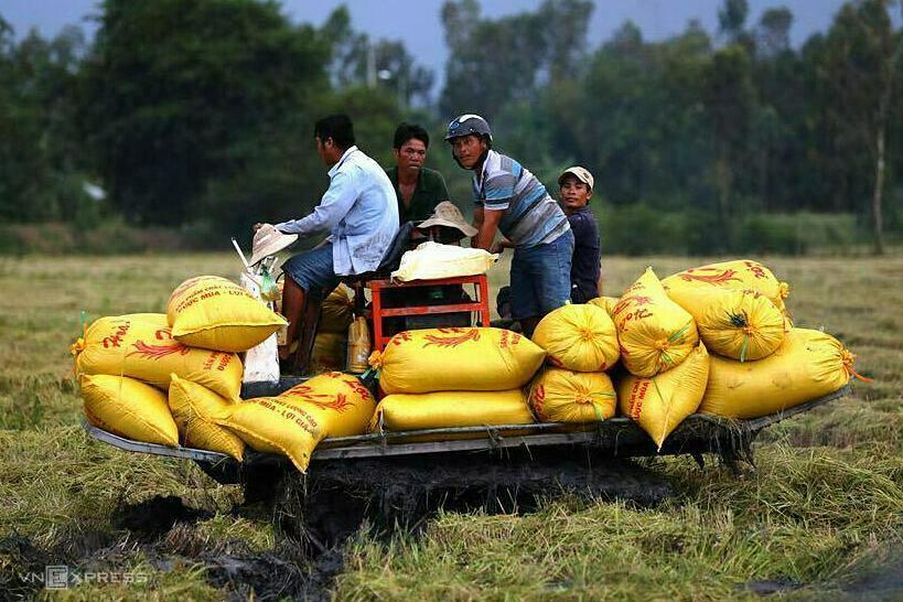 Nông dân gặt lúa ở cánh đồng thuộc tỉnh Bến Tre. Ảnh: Hữu Khoa.