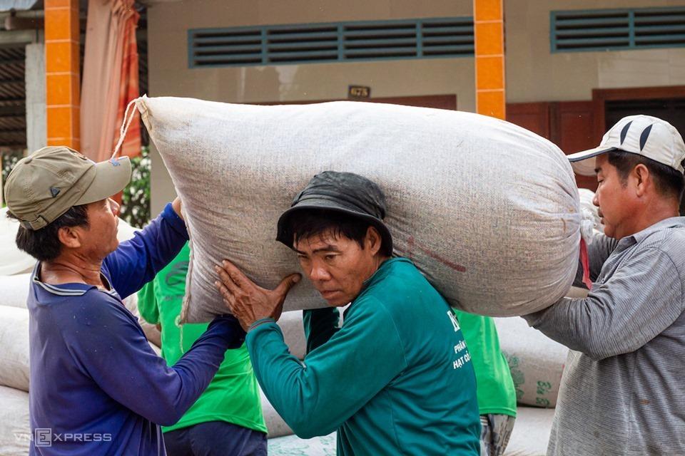 Nông dân xã Thạnh An, huyện Vĩnh Thạnh, TP Cần Thơ thu hoạch lúa vụ Đông Xuân đầu tháng 3. Ảnh: Thanh Trần.