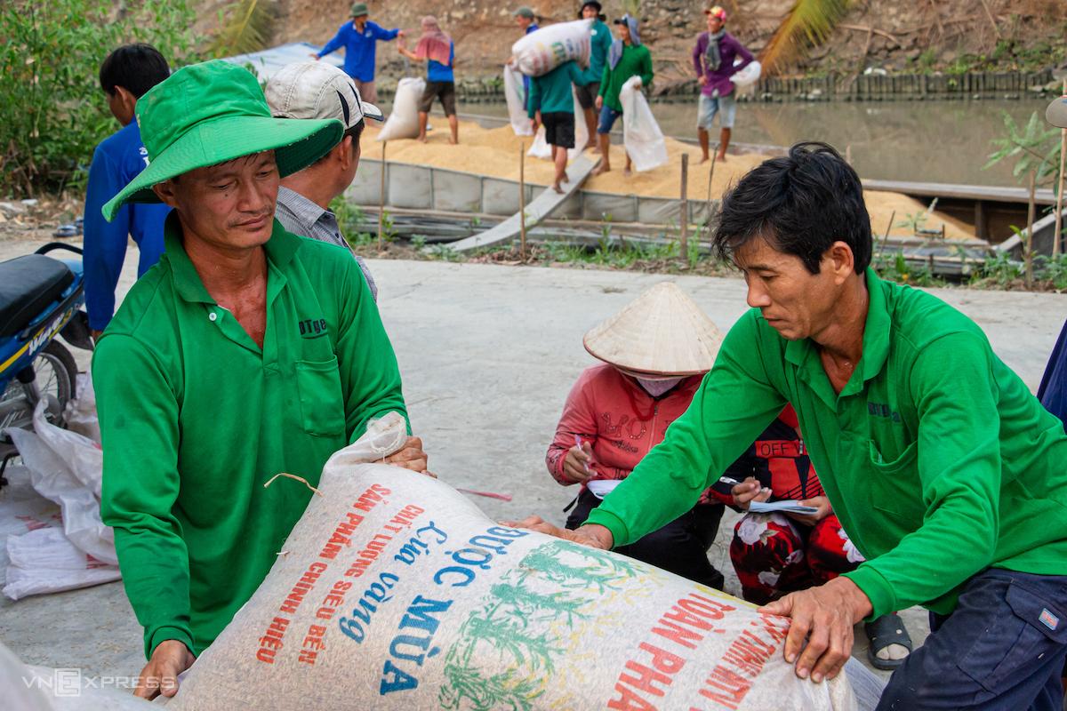 Nông dân xã Thạnh An, huyện Vĩnh Thạnh, TP Cần Thơ thu hoạch lúa vụ Đông Xuân đầu tháng 3/2020. Ảnh: Thanh Trần