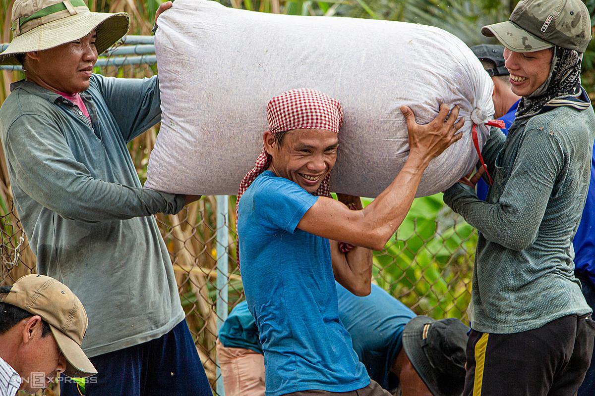 Nông dân xã Thạnh An, huyện Vĩnh Thạnh, TP Cần Thơ thu hoạch lúa vụ Đông Xuân đầu tháng 3/2020. Ảnh: Thanh Trần.