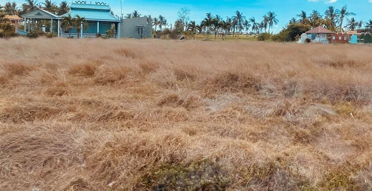 Tại Cà Mau, hơn 19.000 hecta lúa bị thiệt hại, 43.000 hecta rừng đang ở cấp độ cực kỳ nguy hiểm, hơn 20.000 hộ dân bị thiếu nước sinh hoạt.