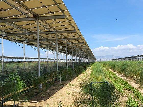 Hệ thống điện mặt trời được lắp đặt tại một trang trại nông nghiệp ở Ninh Thuận. Ảnh: Anh Minh.