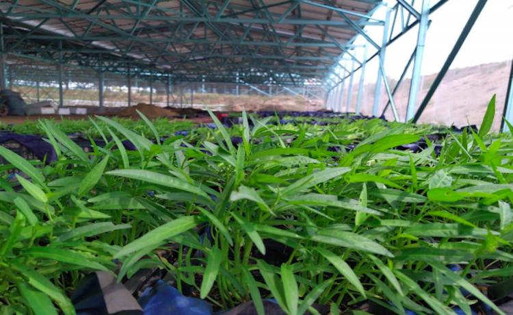 Hệ thống điện mặt trời được lắp đặt tại một trang trại nông nghiệp ở Ninh Thuận. Ảnh: Anh Minh
