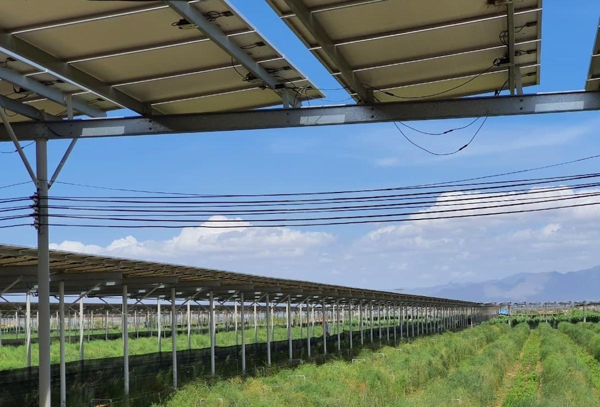 Một mô hình điện mặt trời kết hợp trồng cây nông nghiệp ở miền Trung. Ảnh: Duy Hà