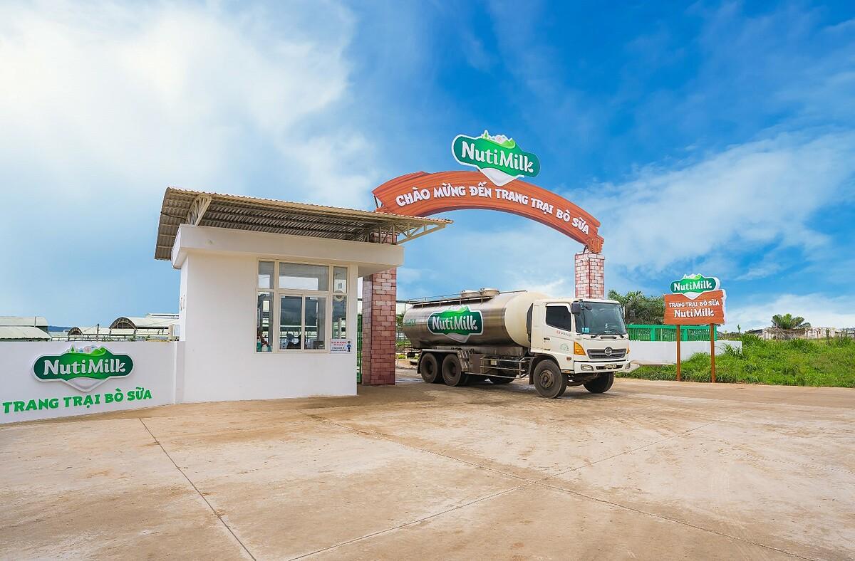 Trang trại bò sữa NutiMilk cung cấp nguồn sữa tươi chất lượng cao với 3,5 g đạm và 4 g béo trong 100 ml. Ảnh: NutiFood.