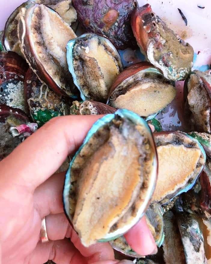 Bào ngư gắn mác Hàn Quốc được rao bán với giá 15.000 đồng một con. Ảnh: Phương Thanh.