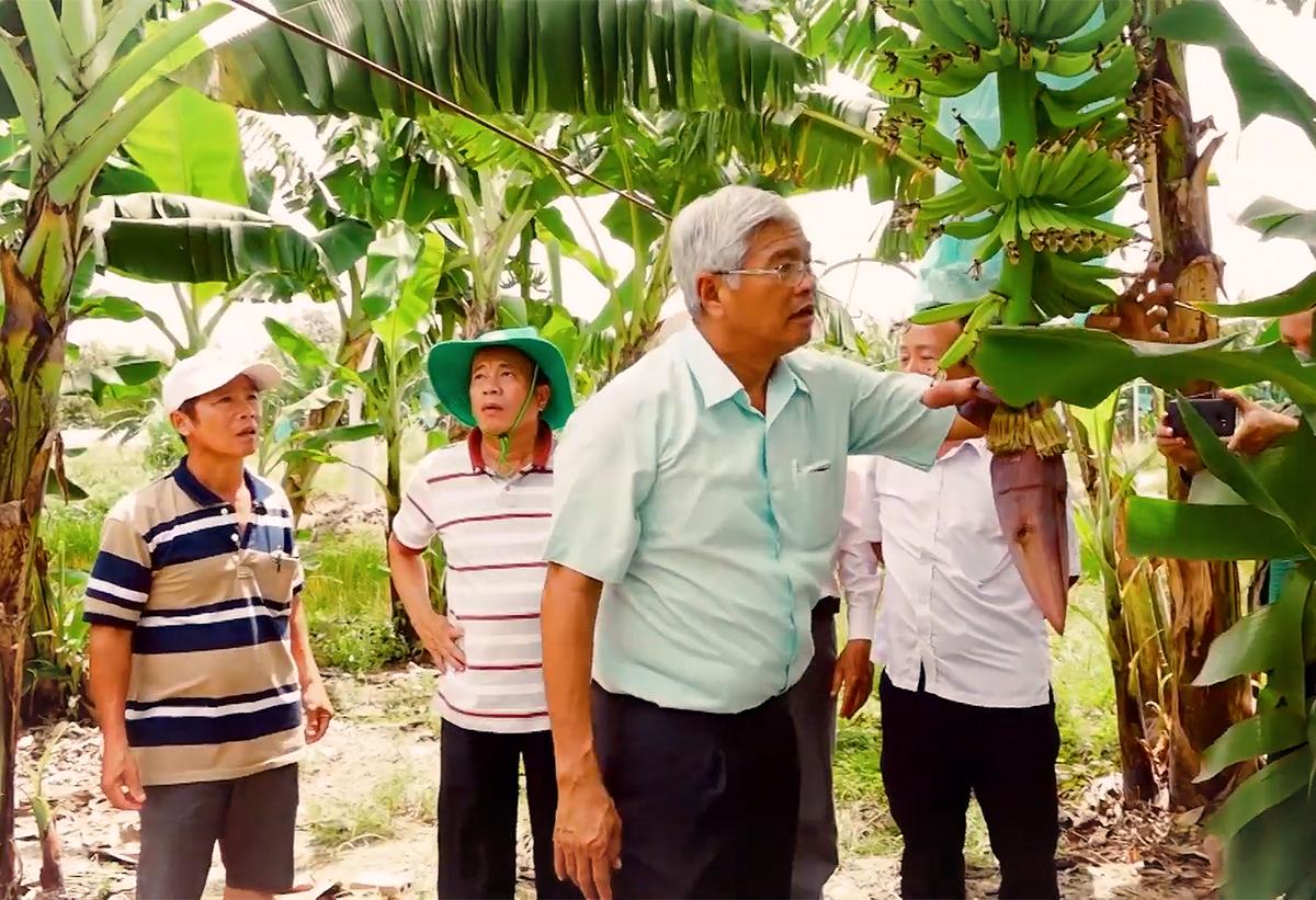 Ông Võ Quan Huy bên trang trại chuối thu hoạch bằng dây cáp tại Long An.