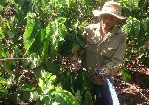 Người nông dân trồng cà phê. Ảnh: Phan Anh