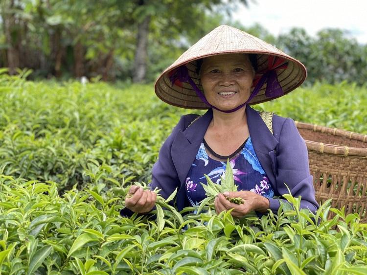 Vườn nguyên liệu của Cát Nghi Tea đặt tại Bảo Lộc, Lâm Đồng. Ảnh: CNT.