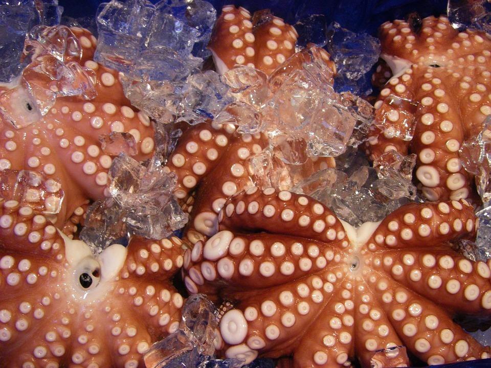 Xuất khẩu mực, bạch tuộc tăng 20%