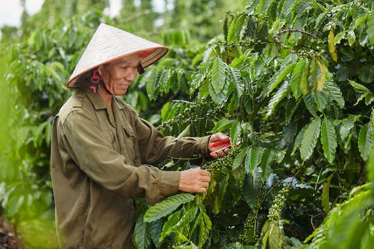Nestlé Việt Nam triển khai dự án phát triển cà phê bền vững Nescafé Plan,