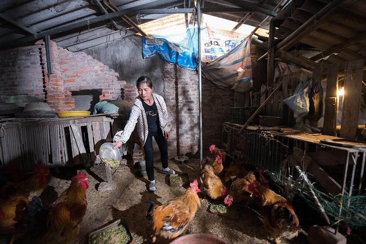 Chương trình giúp nhiều chị em nông thôn hiện thực hóa ước mơ thoát nghèo từ chăn nuôi. Ảnh: GreenFeed.