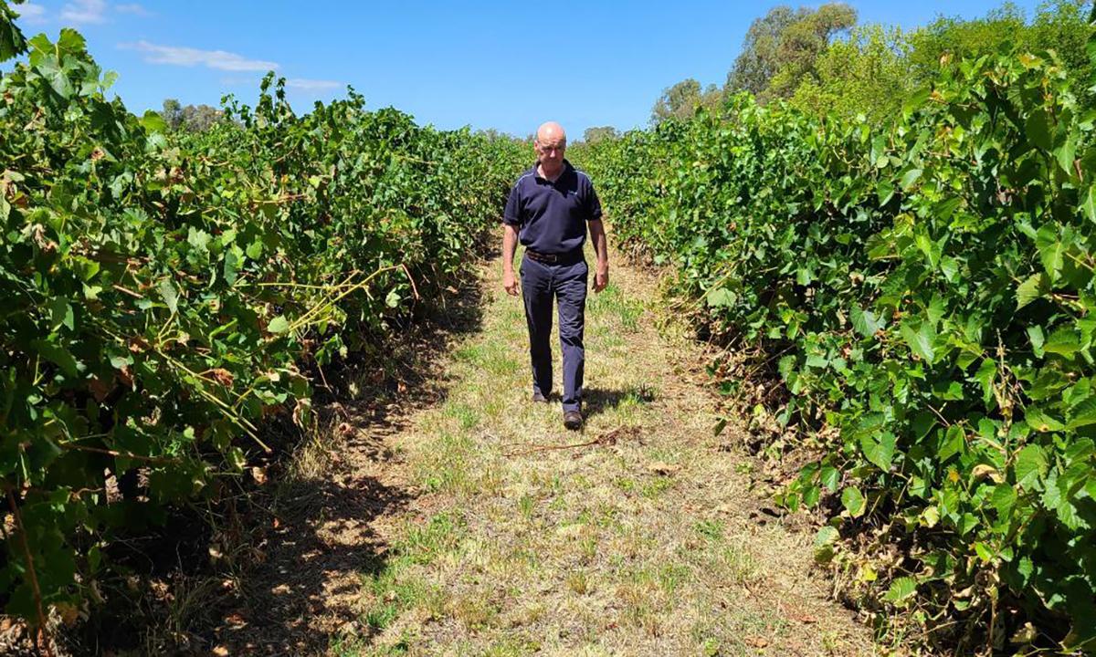 Alister Purbrick, CEO Tahbilk Group bước đi trên cánh đồng nho ở Victoria, Australia tháng 2/2020. Ảnh: CNN