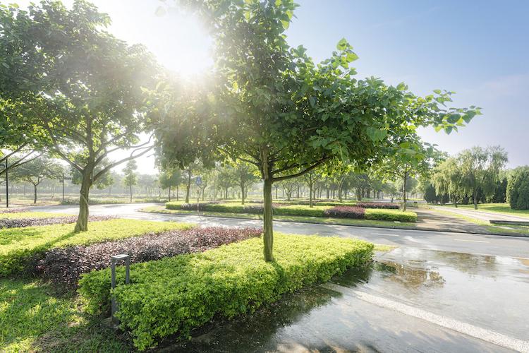 Một góc công viên trung tâm tràn ngập sắc xanh tại Hado Charm Villas