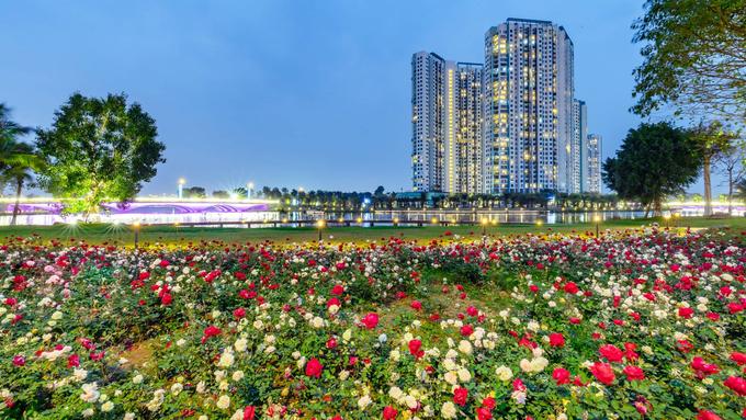 Vườn hồng tại Khu đô thị Ecopark, nằm bên hồ Thiên Nga, dài hơn 300m với hơn 200.000 bông hoa hồng. Ảnh:Phí Đức Toàn.